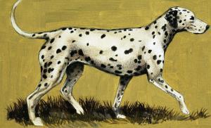 Dalmation Dog by English School