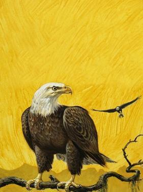 Eagle by English School