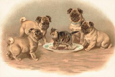 Four Pug Dogs Sitting around a Kitten on a Plate by English School