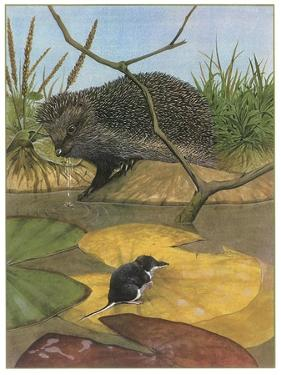 Hedgehog and Vole by English School