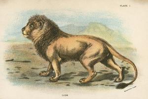 Lion by English School