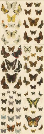 Our British Butterflies
