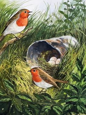 Robins by English School