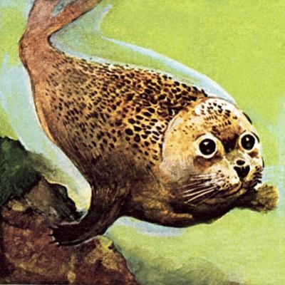 The Common Seal