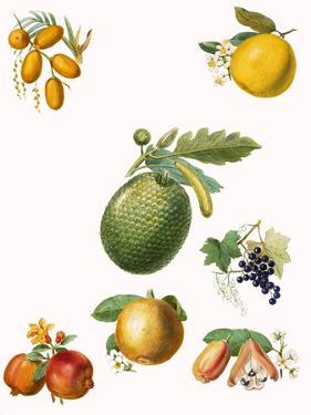 Tropical Fruit by English School