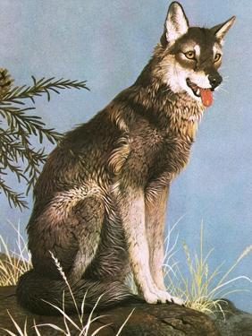 Wolf by English School