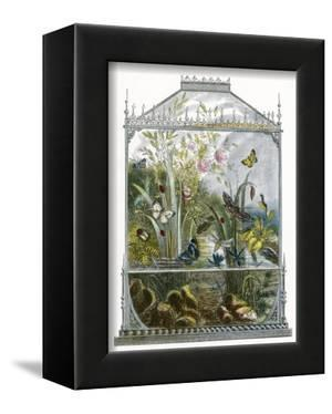 The Butterfly Vivarium by English