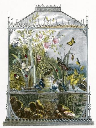 The Butterfly Vivarium