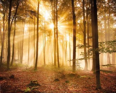 Enlightened Forest