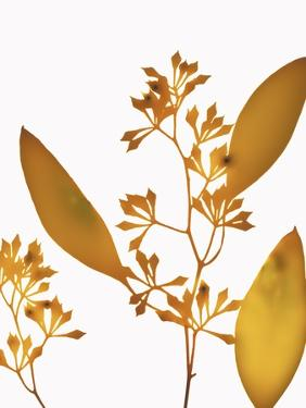 Yellow Eucalyptus by Envision