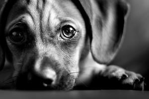 Puppy Eyes by epatrician