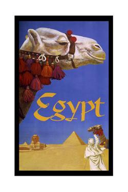 Eqypt Camel