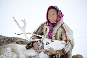 A Tundra Nenets Woman With Her -Akva- Pet Reindeer (Rangifer Tarandus), Yar-Sale District, Yamal by Eric Baccega