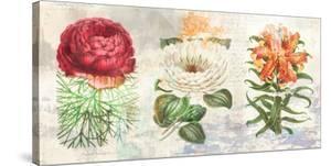 Hortus Botanicus 2.0 by Eric Chestier