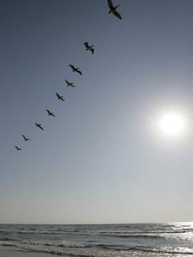 Pelicans Pass over Boca Chica, Texas by Eric Gay