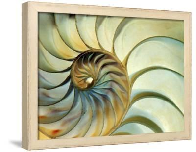 Close-up of Nautilus Shell Spirals by Eric Kamp
