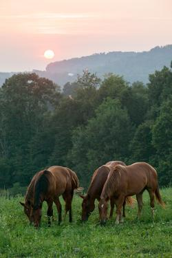 In Rural Hilly Farmland, a Team of Horses Feed on Grass at Sunset by Eric Kruszewski