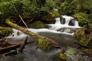 Waterfalls in a Stream Carve Through Wilderness, Forest and Fallen Trees by Eric Kruszewski