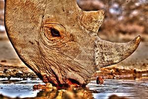 Black Rhino drinking, 2018 by Eric Meyer