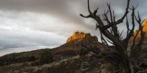 A Dead Juniper in Grand Staircase-Escalante National Monument, Utah by Eric Peter Black