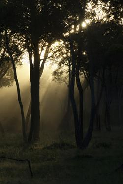 Dusk Comes to the Woodlands at the Edge of the Mara River in Kenya by Eric Peter Black