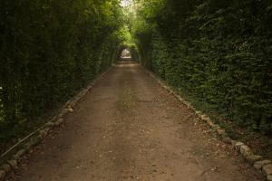 The Main Driveway That Greets You at Hacienda Itzincab-Camara Near Merida, Mexico by Eric Peter Black