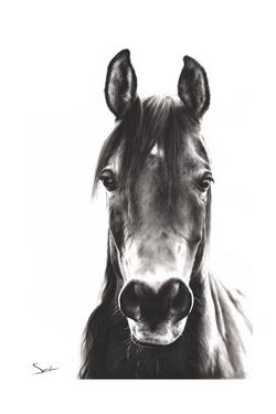 Horse Portrait by Eric Sweet