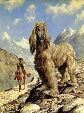 Afghan Hound by Eric Tansley