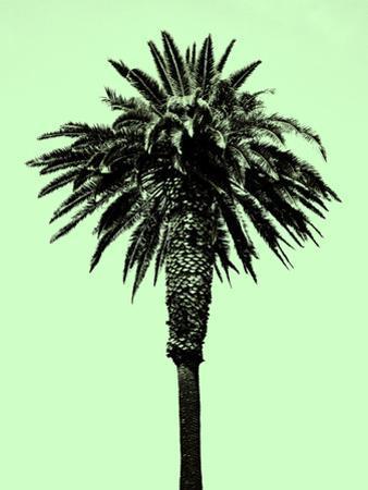Palm Tree 1996 (Green)