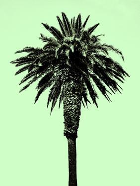 Palm Tree 1996 (Green) by Erik Asla