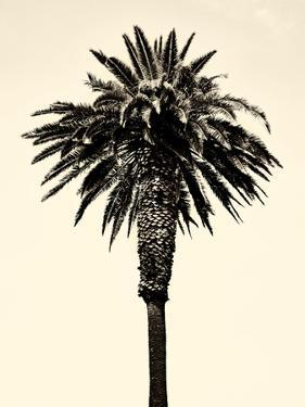 Palm Tree 1996 (Tan) by Erik Asla