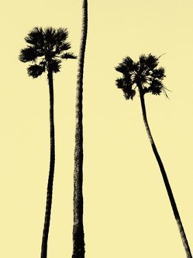 Palm Trees 2000 (Yellow) by Erik Asla