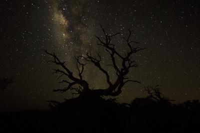 The Milky Way Silhouettes a Gnarly Tree on Mauna Kea Volcano in Hawaii