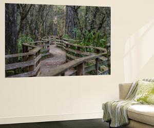Boardwalk of Corkscrew Swamp, Florida by Erika Skogg