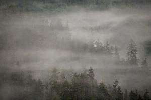 Morning Fog Rises Off of a Spruce, Picea, Forest in Alaska's Inside Passage by Erika Skogg