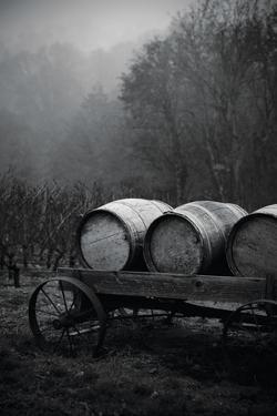 BW Oregon Wine Country II by Erin Berzel
