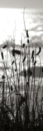 Coastal Grass Panel I by Erin Berzel
