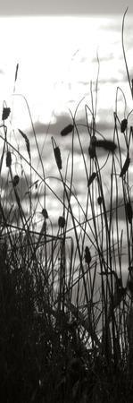 Coastal Grass Panel II by Erin Berzel