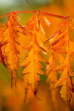 Fall Leaves I by Erin Berzel