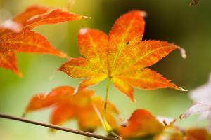 Fall Leaves III by Erin Berzel