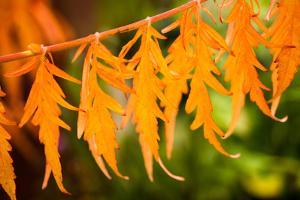 Fall Leaves IV by Erin Berzel