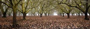 Hazel Tree Grove Pano I by Erin Berzel