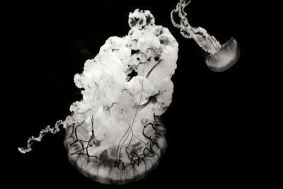Jellyfish Glow VII