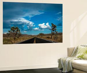 Joshua Tree National Park III by Erin Berzel