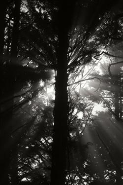 Light and Shadows I by Erin Berzel