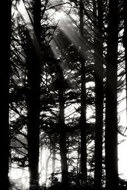 Light and Shadows II by Erin Berzel