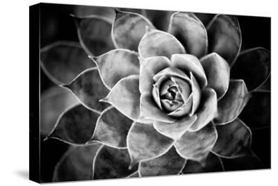 Monochrome Succulent V by Erin Berzel