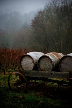 Oregon Wine Country II by Erin Berzel