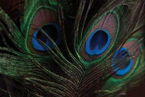Peacock Feathers 1 by Erin Berzel