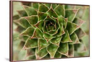 Sempervivum Succulent II by Erin Berzel